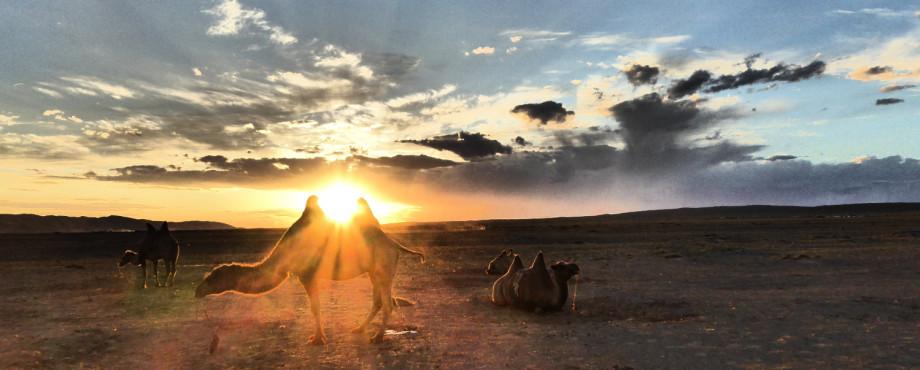 gobi desert sunset