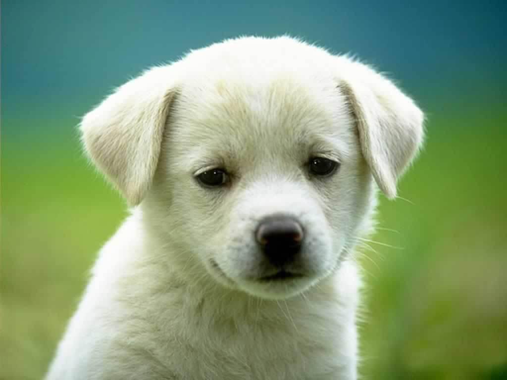 chien trop mignon
