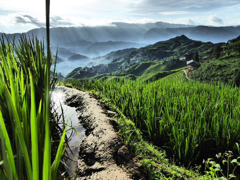 Les rizières en terrasses de Longji, près de Tiantouzhai